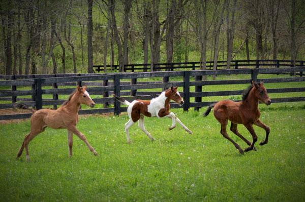 beautiful colts