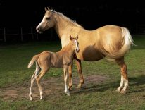 what is male horse called