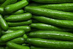 Can Horses Eat Cucumber?