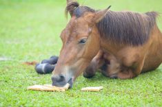Can Horses Eat Bread?