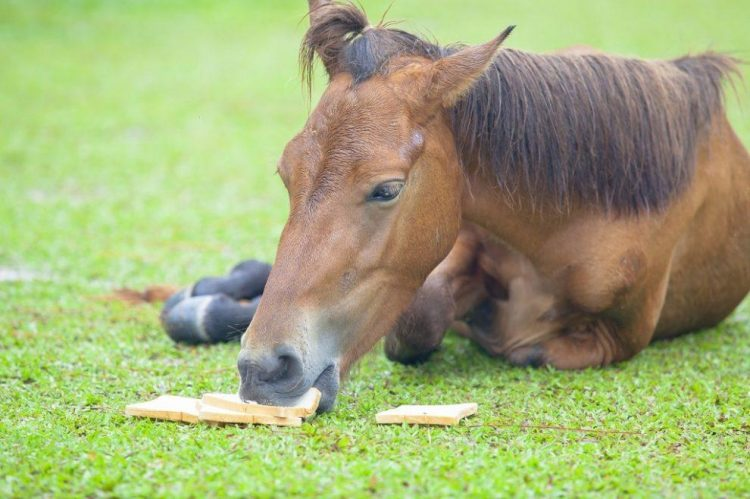 Can Horses Eat Bread?