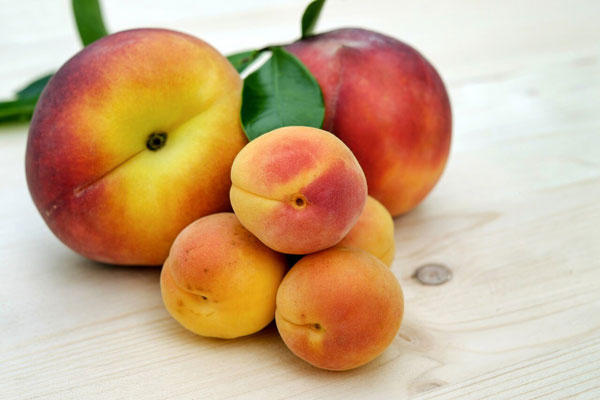 Can Horses Eat Peaches?