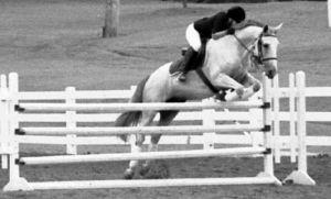 Highest Horse Jumps Recorded