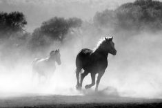 How Far Can A Horse Run In A Day
