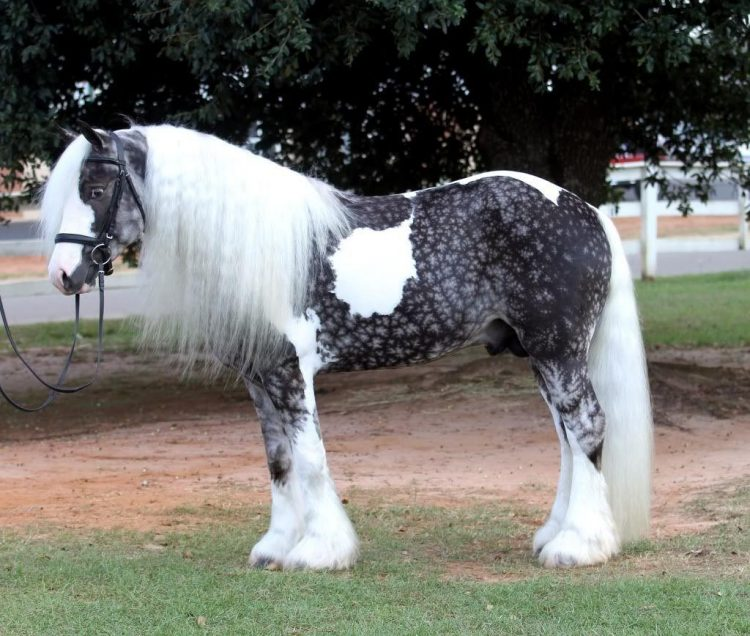 Top 5 Horses With Long Manes And Tail Horse Is Love