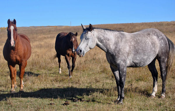 Do horse sleep standing up?