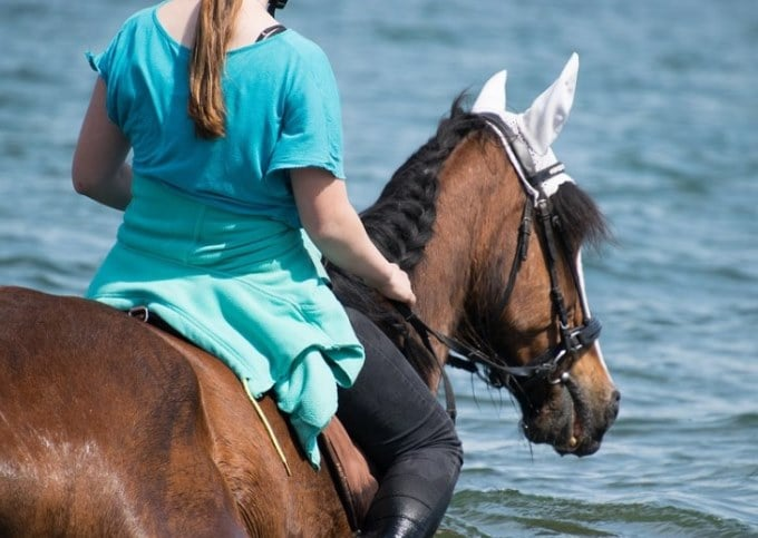 horse swim with rider