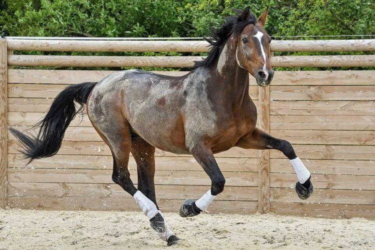 How Fast Can a Horse Run
