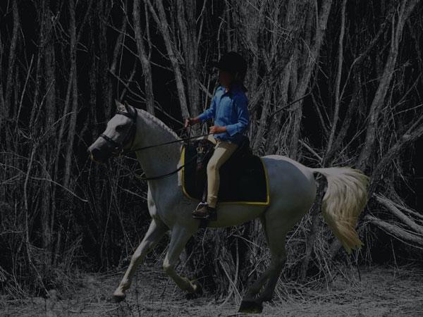 Riding horses at a night
