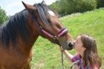 How Do Horses Show Affection to Humans?