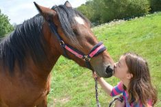How-do-horse-feel-love-and-how-do-horses-show-affection-to-humans