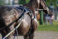 Why Do Horses Sweat