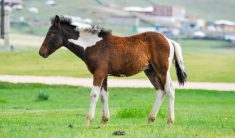 What-is-A-Baby-Horse-Called
