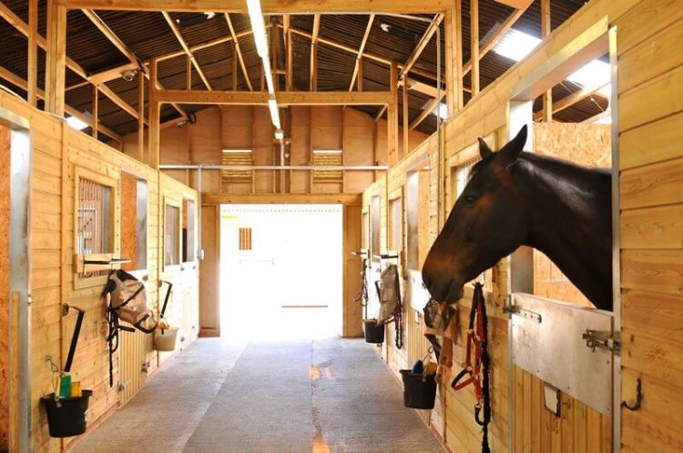 Clydesdale horse barn