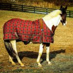 Best Horse Blanket Reviews