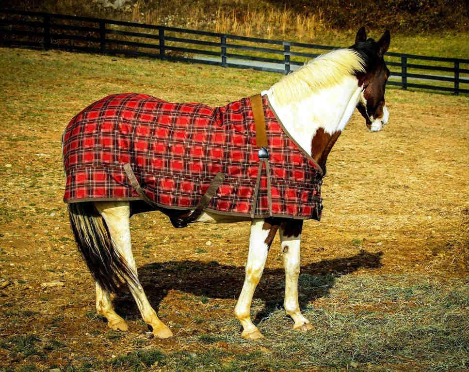 Best Horse Blanket Reviews