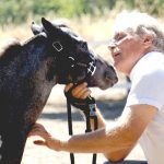 best horse calming supplements_reviews
