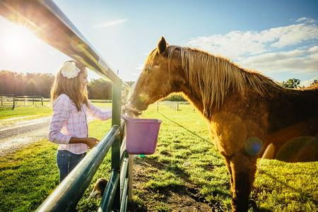best horse feed reviews