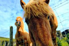 best horse fencing reviews