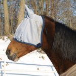 best horse fly masks reviews