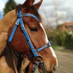 best horse halter reviews