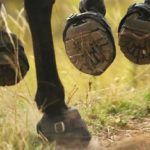 best horse hoof boots reviews