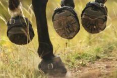 best-horse-hoof-boots-reviews