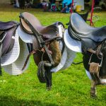 best horse saddles reviews