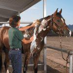 best horse shampoo reviews
