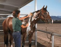 best horse shampoo reviews