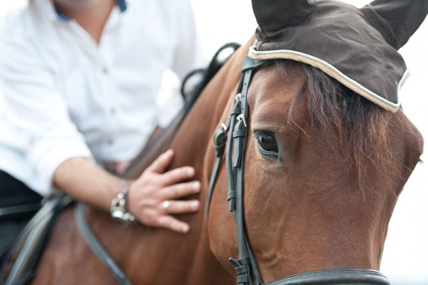calming horse