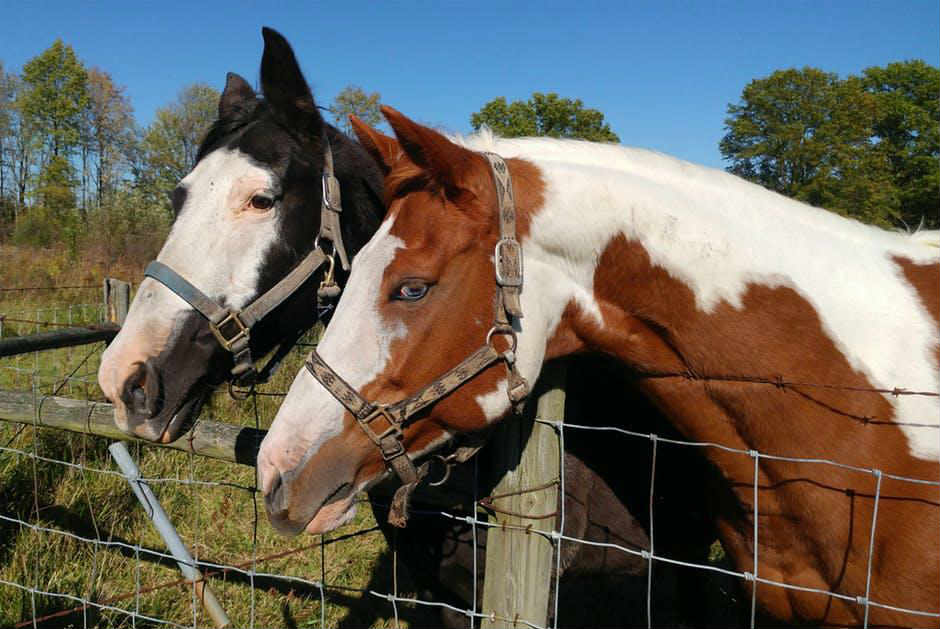 choose the best horse fence