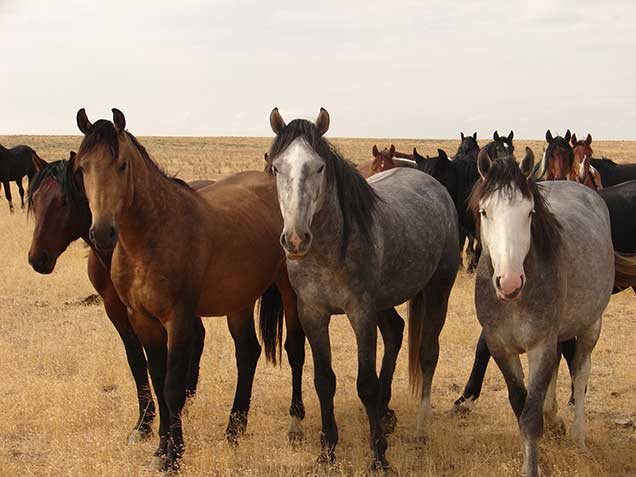 Wild Horses Maintain Their Hooves