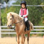 best horse breeds for beginngers