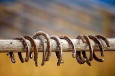 horses need horseshoes