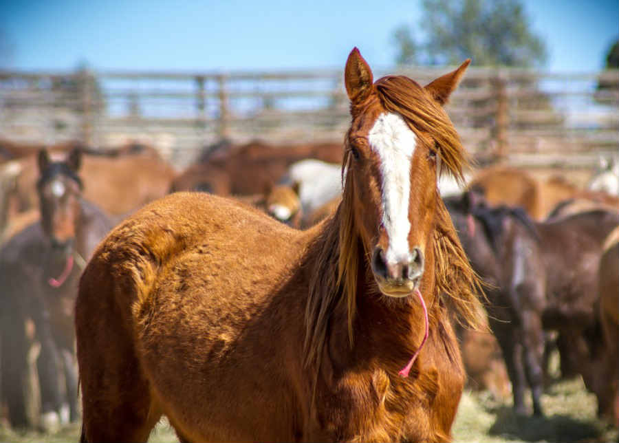 How Much Does A Horse Cost To Buy?