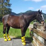 best horse soaking boot reviews