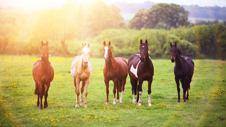 horse Flightiness