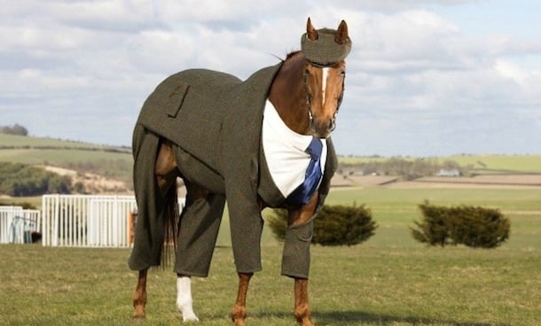 how smart are horses?