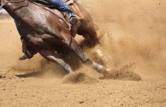 best horse liniments reviews