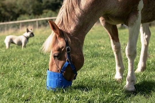 Best Horse Muzzle Reviews