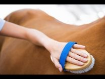 Best Horse Grooming Brushes Reviews