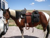 Best Horse Saddle Bags Reviews