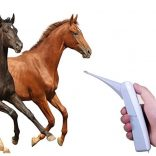 best horse thermometer reviews