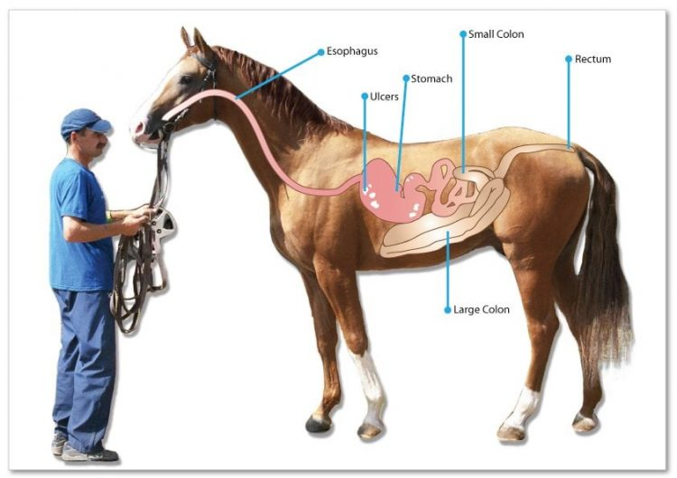 Best Horse Ulcer Supplements Reviews