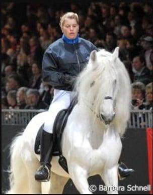 nero white friesian horse