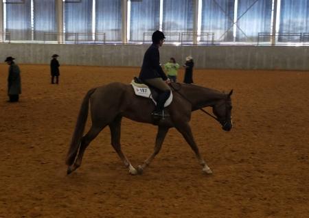 Rapidash Vast Nebula - tallest Appaloosa horse