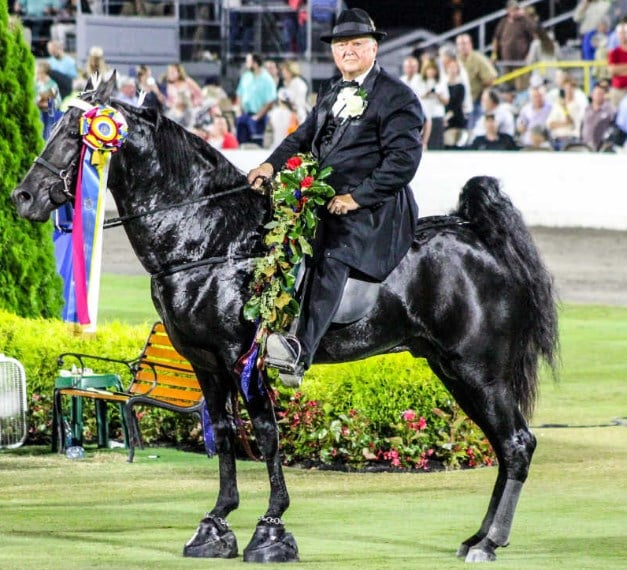 Tennessee Walker Horse National Celebration