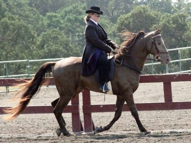 Tennessee Walker horse lifespan