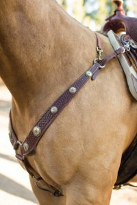 Best Horse Wither Straps on the Market: Reviews & Buyer Guide